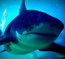 Shark by miroslava