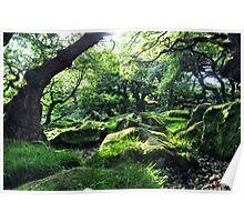 Padley Gorge Poster