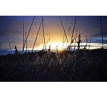 SUNSET THROUGH REEDS  Photographic Print