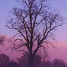 Purple Skies by Mounty