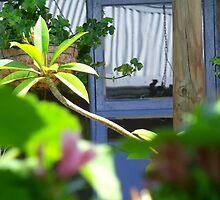 hammock views by LouJay