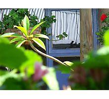 hammock views Photographic Print