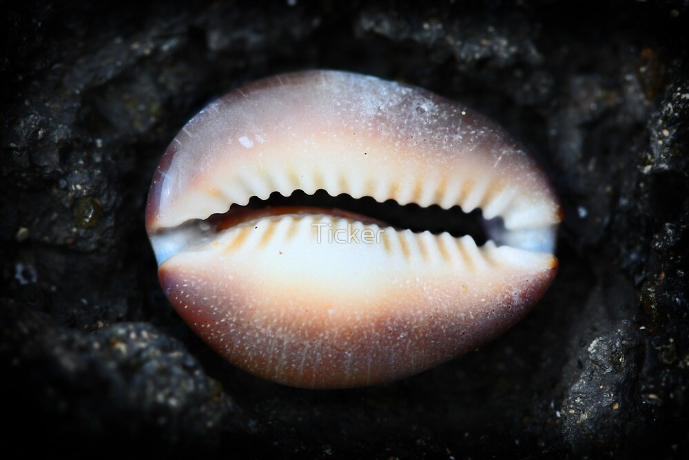 Mouth of a Shell by Ticker