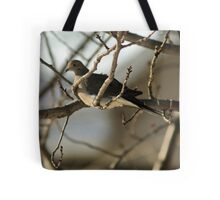 Mourning Dove, New Year's Day Tote Bag