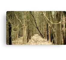 Tree's Parting Canvas Print
