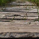 Wooden path - iPhone case by Britta Döll