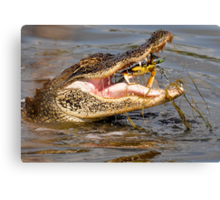 Oh Man Yes - Crabs for Lunch Canvas Print
