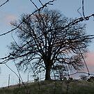 Tree of Life? by teresalynwillis