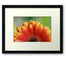 Orange Gerbera Flower Wall Art Framed Print