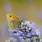 Butterfly by Dominic  Boulding