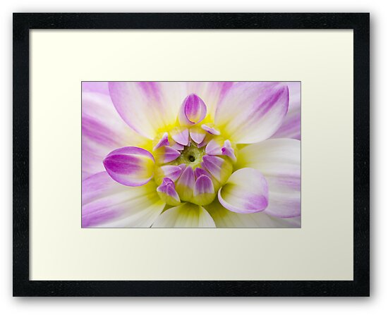 Soft Dahlia Floral Wall Art by Natalie Kinnear