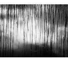 WATER AND REEDS Photographic Print