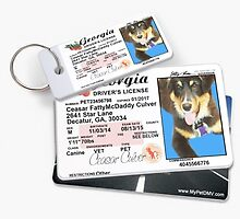 New highly customizable custom pet id tags . by mypetdmv
