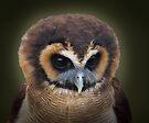 Eyes by Carol Bleasdale