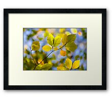 Sunlit Autumn Leaves Framed Print