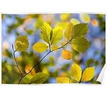 Sunlit Autumn Leaves Poster