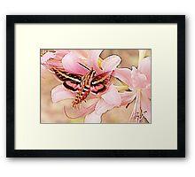 Flower Angels Framed Print
