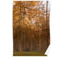 Autumn Larch Poster