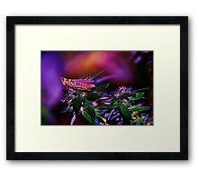 Grass-Hopper Framed Print