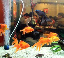 Fish tank, Chinatown by J Forsyth