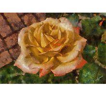 Valentine Rose Photographic Print
