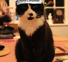 Merry Christmas Kitty! by Vicki Spindler (VHS Photography)
