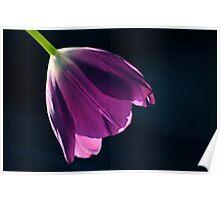 Aria En Violet Poster