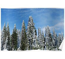 Snow Covered Pines Poster