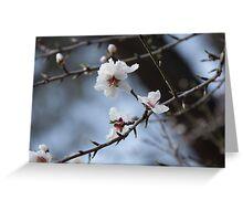 Almond Blossom Greeting Card