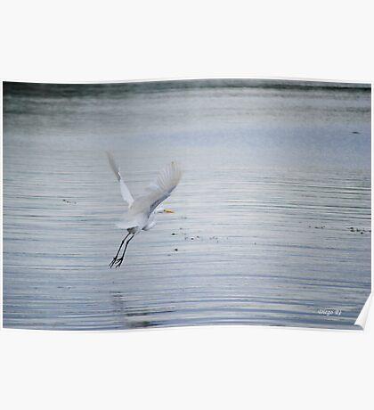 White Egret Flying Poster