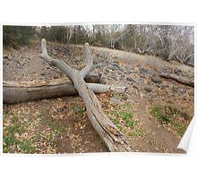 Natures' Sling Shot; Beaver Creek, AZ USA  Poster