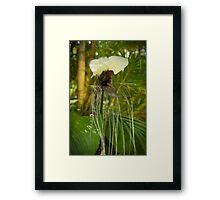 Bat plant flower Framed Print