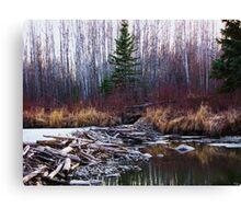 Alberta Beaver Dam Canvas Print