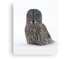 Down Low With A Great Gray Owl Canvas Print