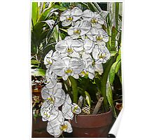 White Orchid Cascade Poster