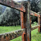 Fence along the Olive Grove by Robyn Forbes