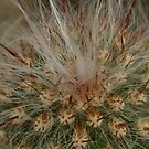 Cactus close-up by Coreena Vieth
