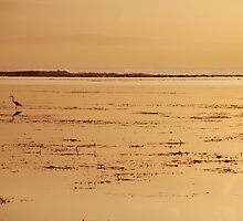 heron at dawn by Michael Brewer