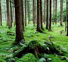 Mossy woods by Michael Brewer