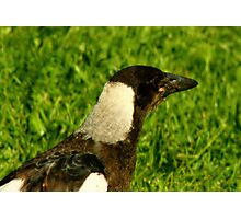 Unusual looking magpie Photographic Print