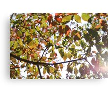 Autumnal Day Canvas Print