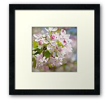 Cherry Blossom Wall Art Framed Print