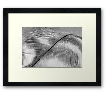 Feather in Black and White Wall Art Framed Print