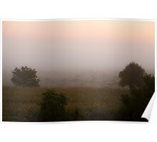 Sheep in a foggy pasture at dawn near mont st. michel france Poster