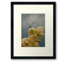 Backyard critter Framed Print