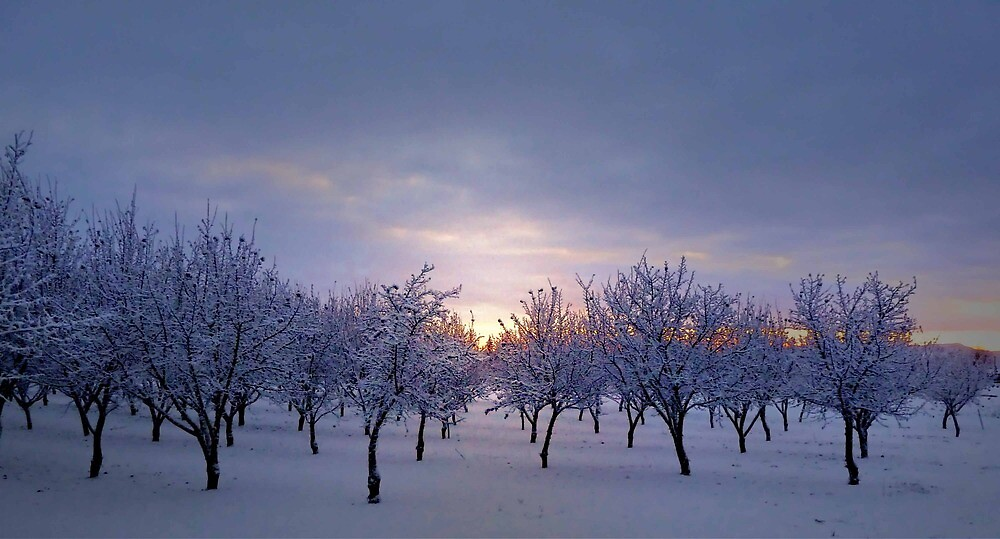 Snow And Early Light by Charles & Patricia   Harkins ~ Picture Oregon