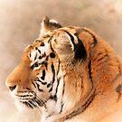 Amur Tiger by Karol Livote