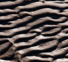 Mud texture at low tide by Michael Brewer