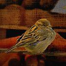 Venetian sparrow by almaalice