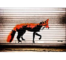 Urban Fox, by Stewy Photographic Print